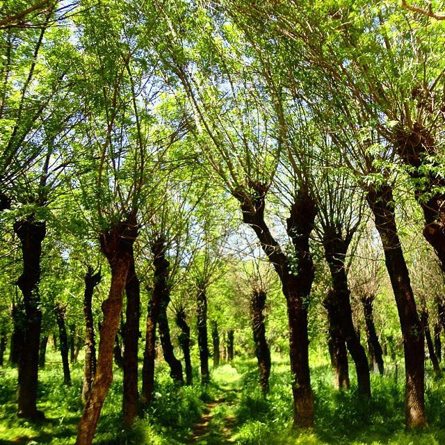 forestpark forestlacdetaanayel lakediscoverlebanon discoverlebanonsnature beautifullebanon beautifulnature whatsuplebanon treesforetlacdetaanayel lac (Taanayel- Bekaa)