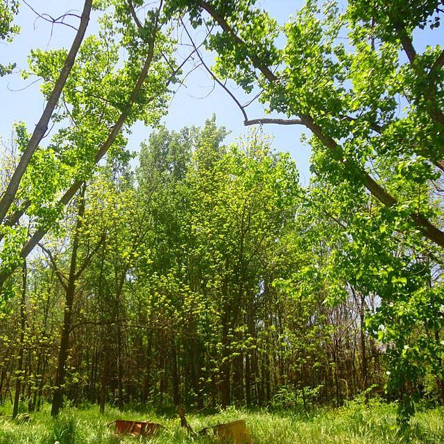 forestpark forest forettreesgarden orchard natureshots naturelovers discoverlebanon discoverlebanonsnature
