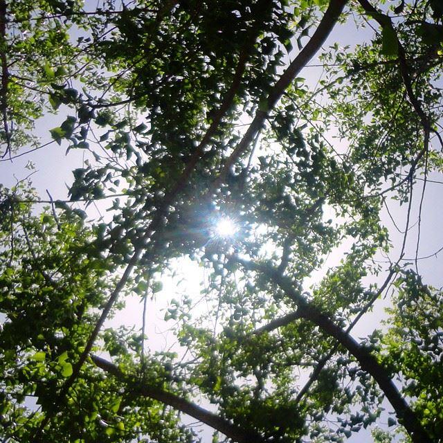 sun sunlights forestpark garden orchard reserve