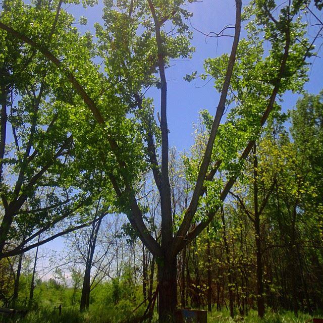 natureshots discoverlebanon discoverlebanonsnature reserve garden orchard trees