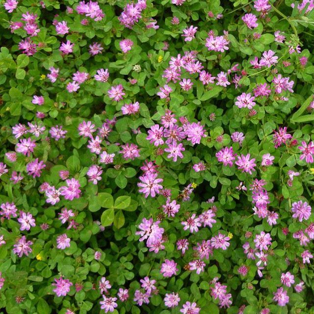 flowers fleurs springspirit springmoments