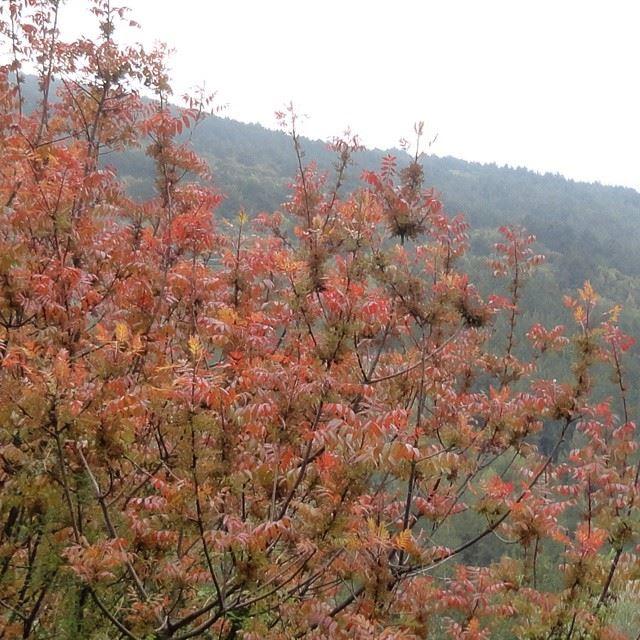 naturecoloured colorful plantsnatureoflebanon mountain trees springmoments spring