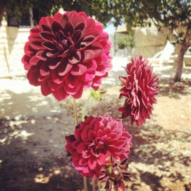 flowers nature garden