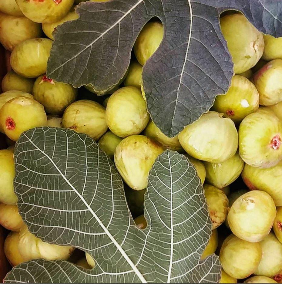 Figs Plenty of Them...