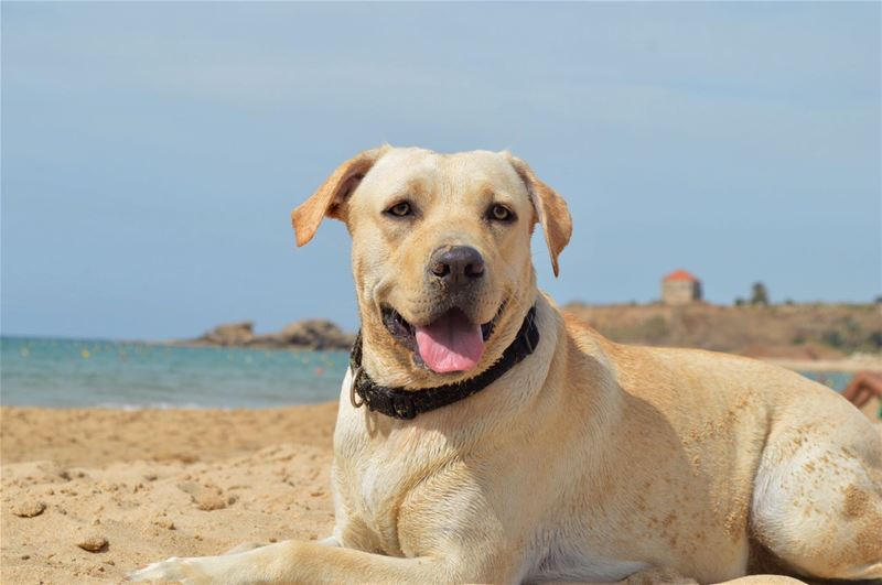 Tima enjoying the sun in the beautiful sandy Byblos Beach
