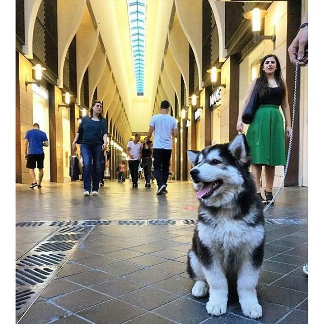 When your dog is happier than you at BeirutSouks (Beirut Souks)