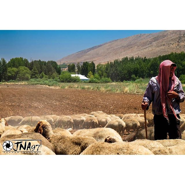 There is a proverb which states that the shepherd always tries to persuade the sheep that their interests, and his own are the same. 🐑🐏 (Anjar, Lebanon)