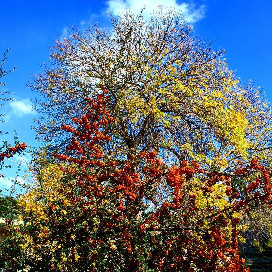 #autumn #autumncolors #couleurdautomne #