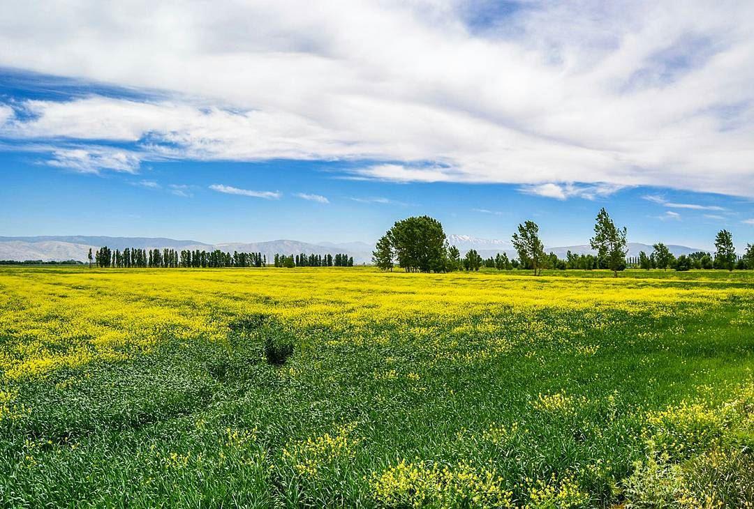 The beautiful plains of west bekaa! (Kefraya West Bekaa)