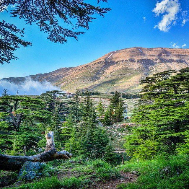 The Cedars North Lebanon