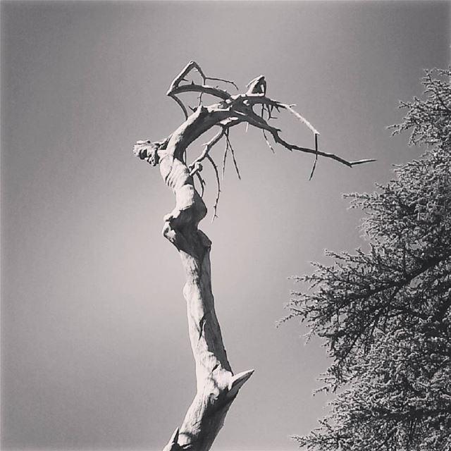 Jesus Crucified carved on Cedar tree (Cedars of God)
