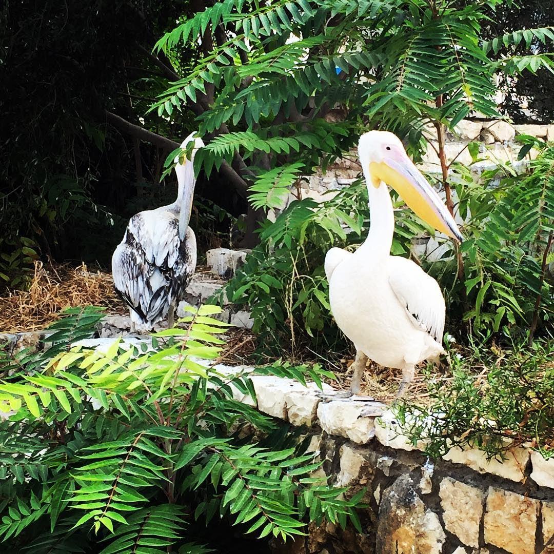 Casual (Bouar, Lebanon)