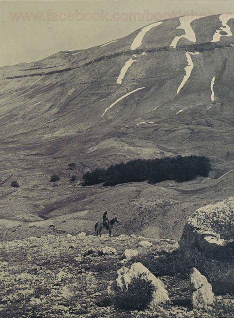 1931 غابة أرز الرب بشري لبنان