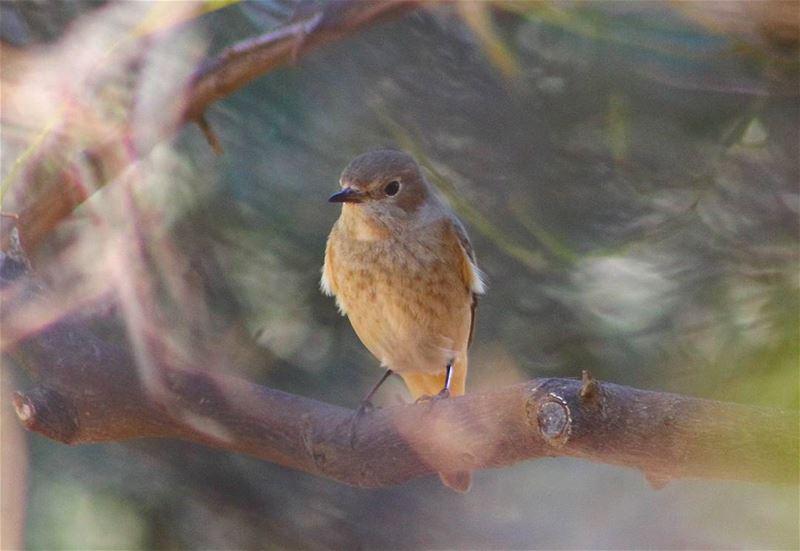 Macro Bird