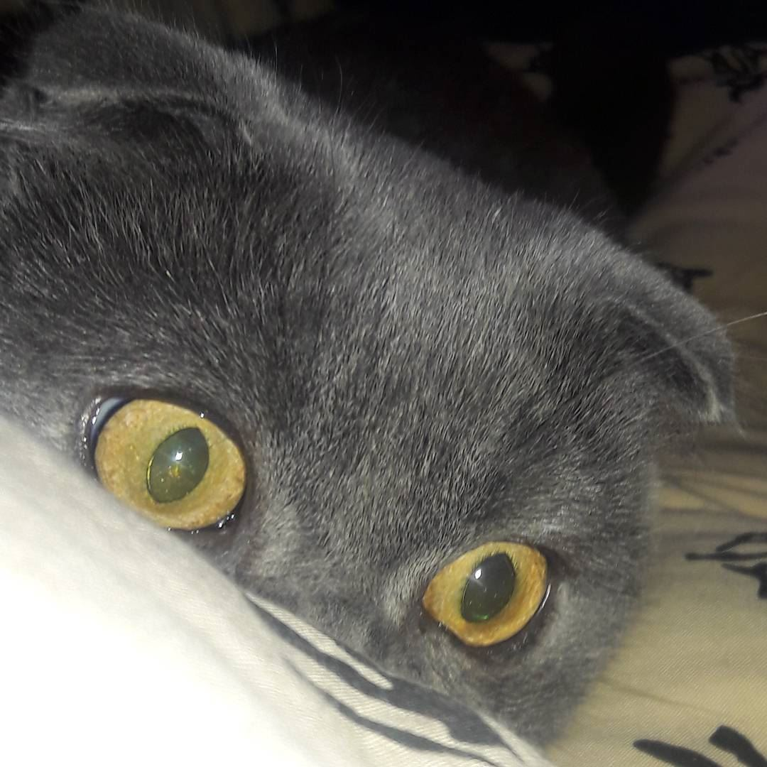 naughty love is in your eyes cats