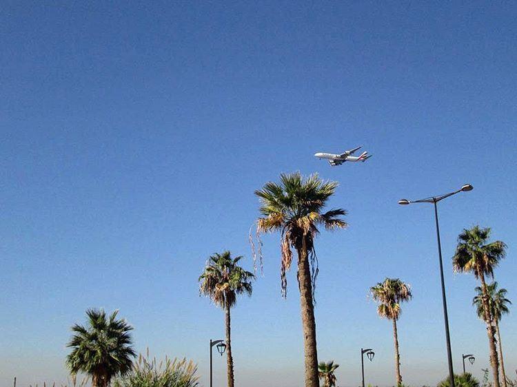 Под крылом самолета о чем-то грустит...пальма...