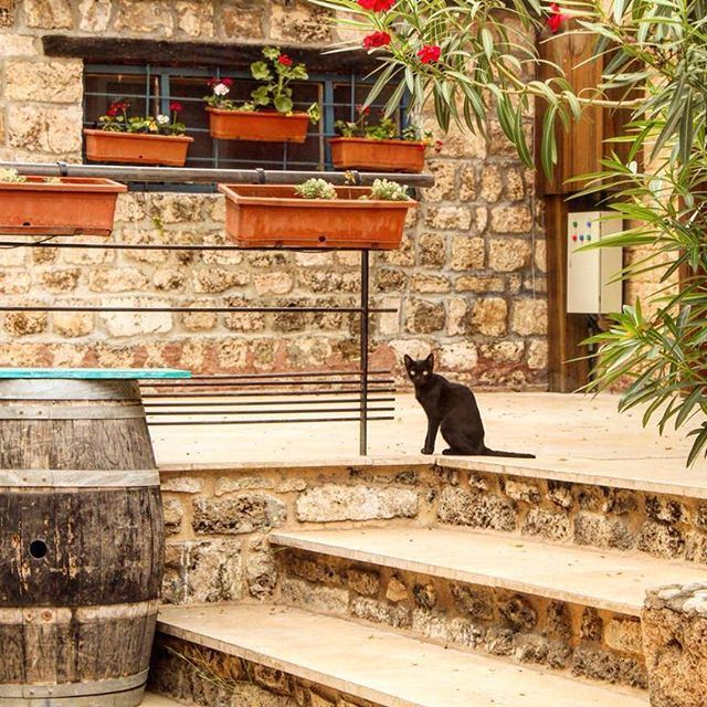 Have a great day from byblos