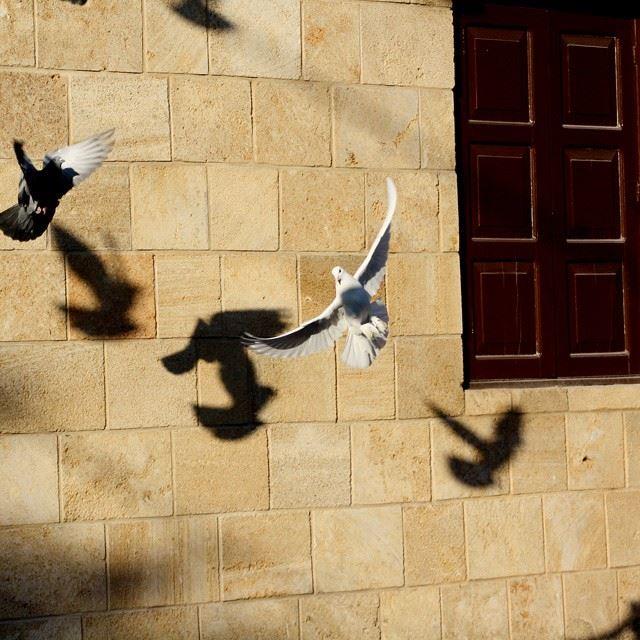 Fly bird, fly...