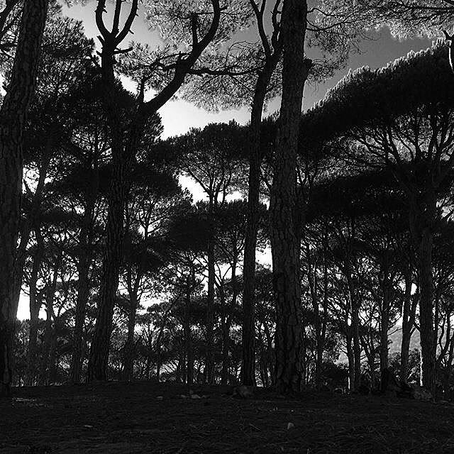 Beauty pines 🌳😍 (Aishiye)