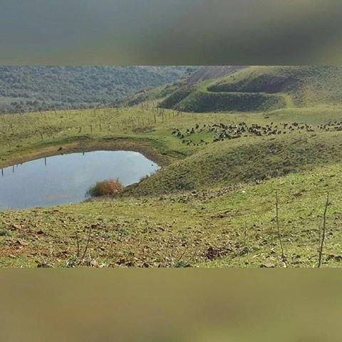 "Beauty in the nature... ""el berak"" around Aishieh 👌 Send your photos dm. 📷"