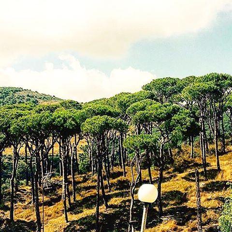 Through the pines..🍃 (Aishiye)