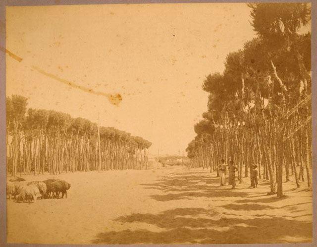 Horch Beirut 1889