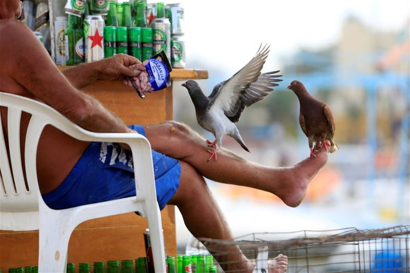 A man feeding pigeons perched on his leg at Tyre port.