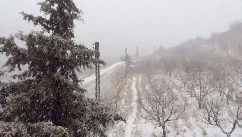 Snowing in Shouf (Barouk - Shouf)