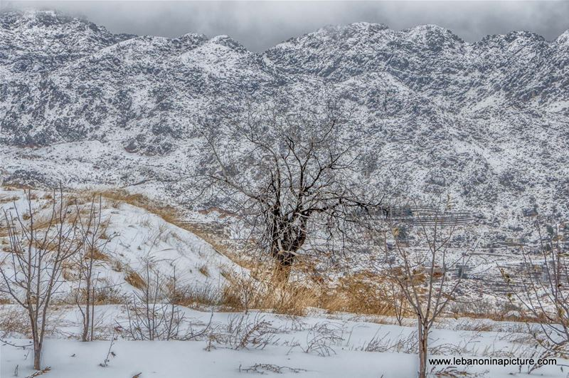 Lonely Cold Tree (Laklouk, Lebanon)