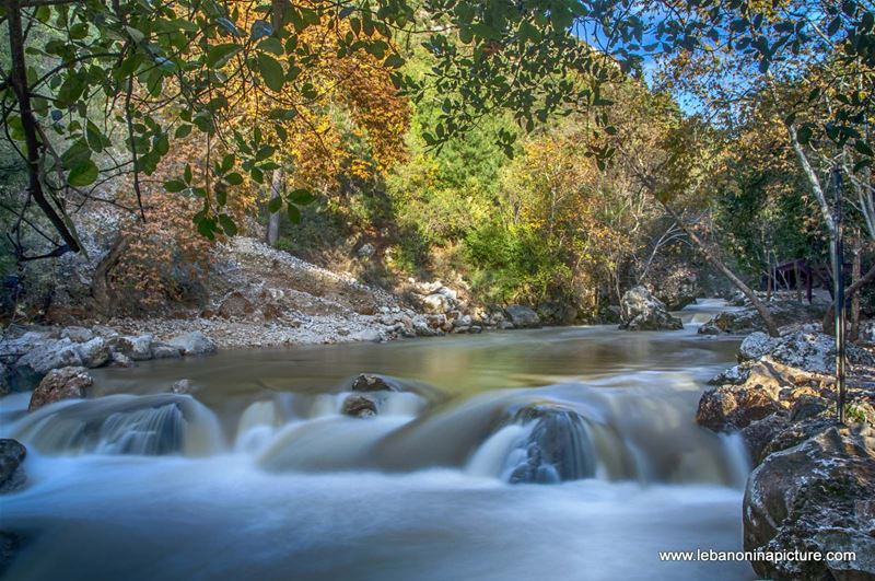 The Water Raging and Flowing and The Trees Slowly Going Into Sleep Waiting for Spring to Come (Nahr Ibrahim, Lebanon)
