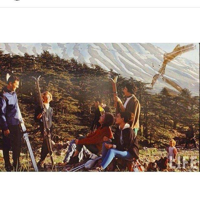 الارز عام ١٩٦٦ ،#Cedars in 1966