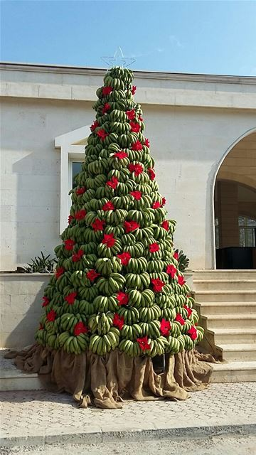 A 5m Christmas tree made of bananas in the town of Damour.