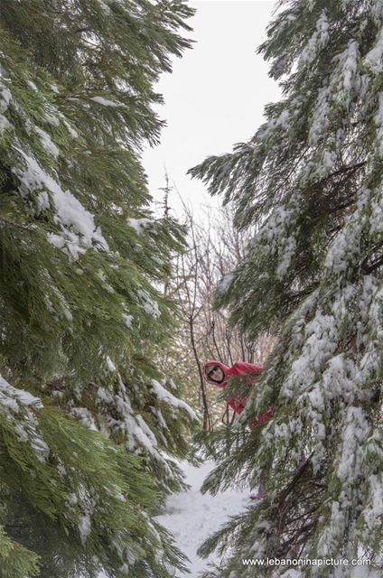 Chaperon Rouge in The Snowy Forest and the Lonely Door (Laklouk, Lebanon)