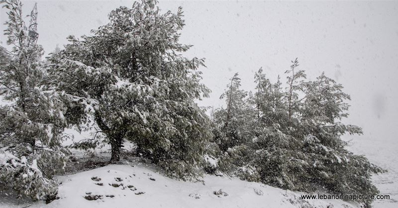 Trees and Roads Covered by Snow (Wata Joz, Lebanon)