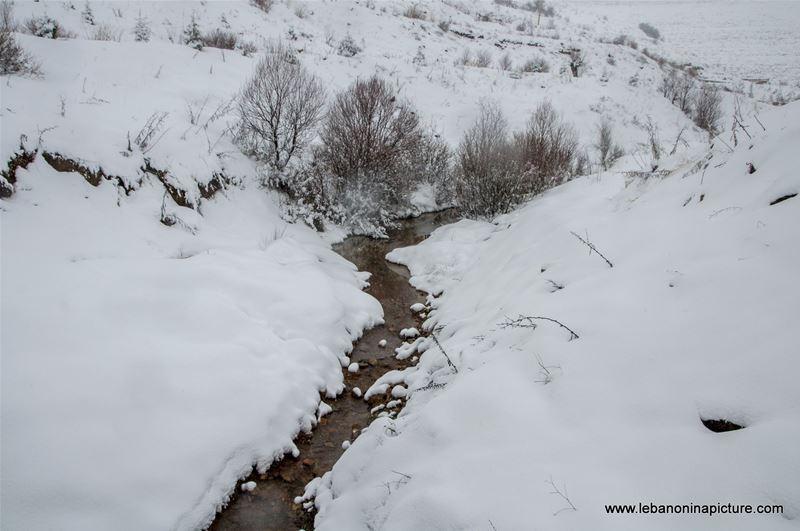 Trees and Faraya River Covered By Snow (Sad Chabrouh, Lebanon)