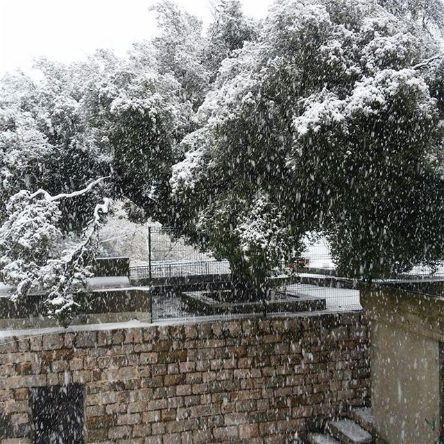 Snowing (Wadi el Karm)