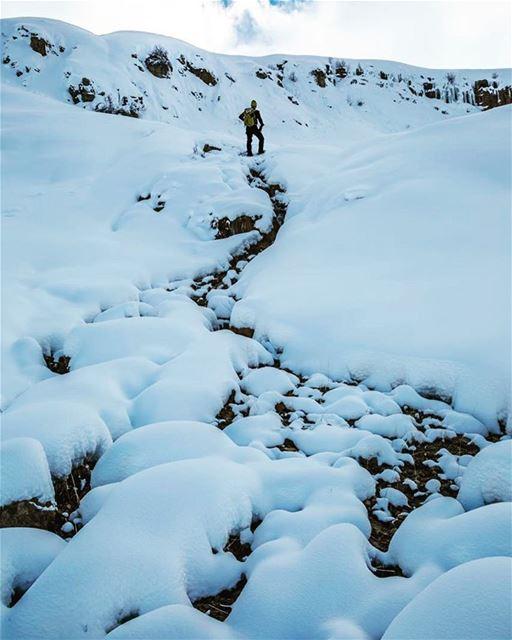 Snow shepherd..... (Mount Sannine)