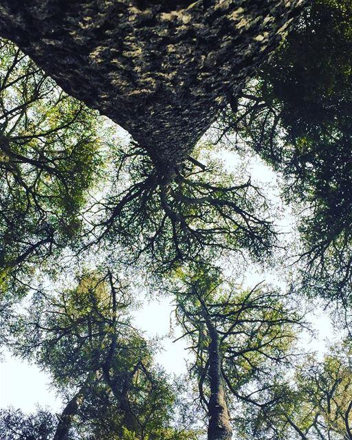 The upside... (Cedars of Lebanon)