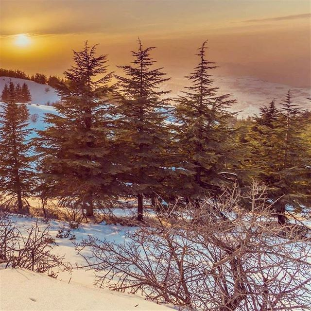 With every breath in there is a breath out. With every apparent sunset... (Shouf Biosphere Reserve)