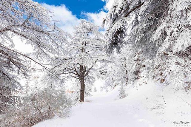 ainzhalta shouf lebanon shoufreserve canonme 10452_lebanon 🇱🇧 ... (Al Shouf Cedar Nature Reserve)