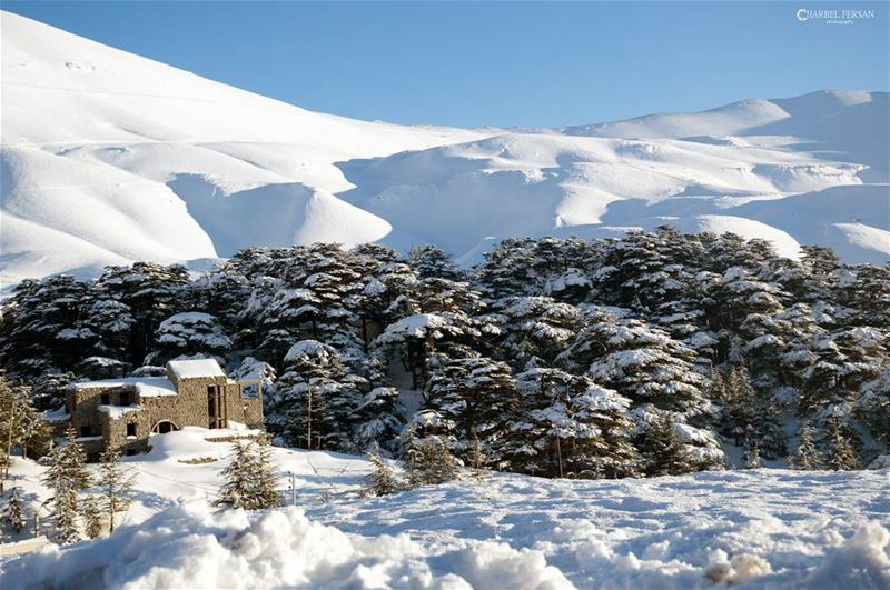 Natural Freezing Beauty ❄www.charbelfersan.com - © All rights reserved... (The Cedars of Lebanon)