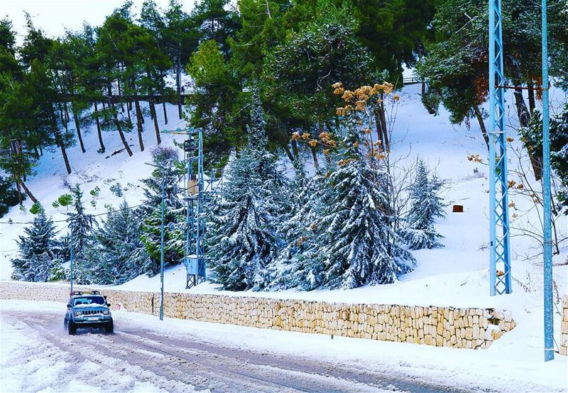 Zahle zahlelebanon snow 2017 tree like4like followforfollow ... (Zahlé, Lebanon)