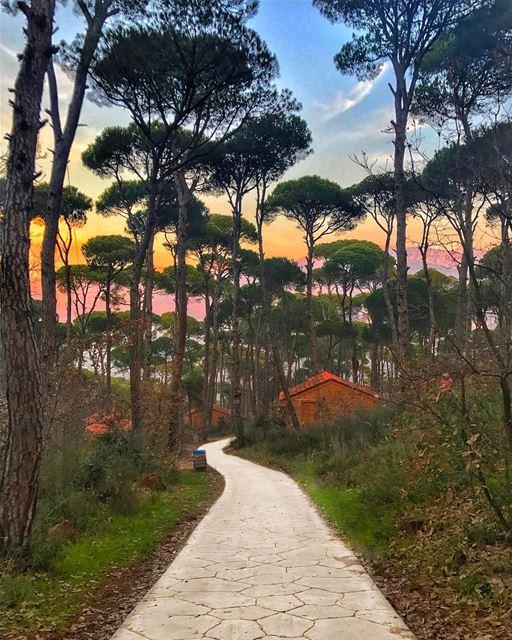 Whichever path you take in life, make sure you are well accompanied ❤🌲❤ ... (La Maison de la Forêt)