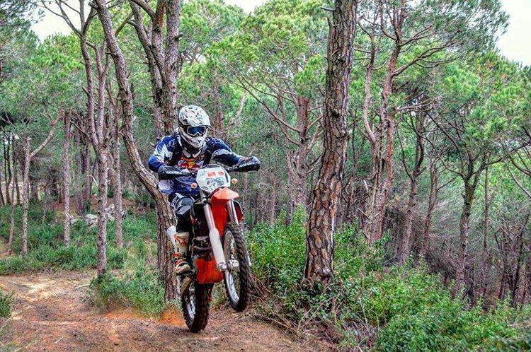 forest tree redbull ktm anb gopro gastronomia lebanon sky ...