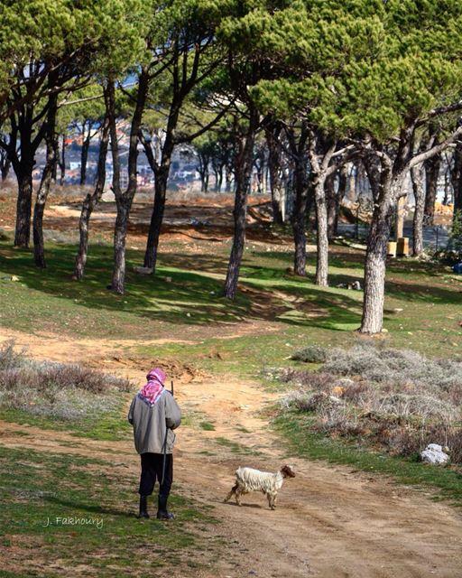 Sunny walks in the woods @livelovemarjeyoun (Marjayoûn, Al Janub, Lebanon)