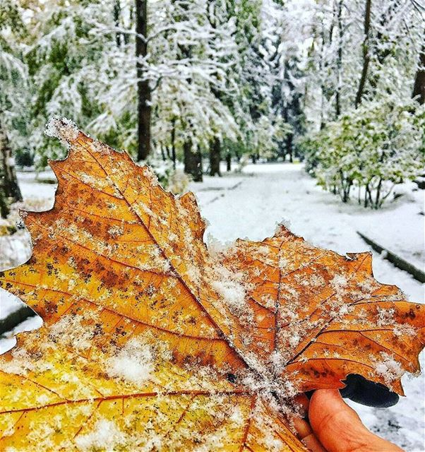Hope 😇🍁❄❤------------------------------------------------ snow trea ... (عيون السيمان كفردبيان)