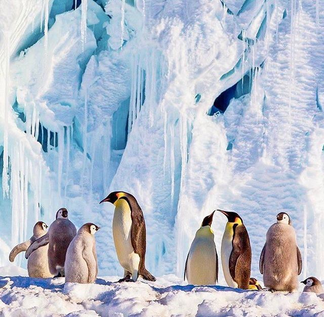 Please Perla bring some penguins with you🤗🐧❄️ penguinlover penguins... (Antarctica/South_Pole)