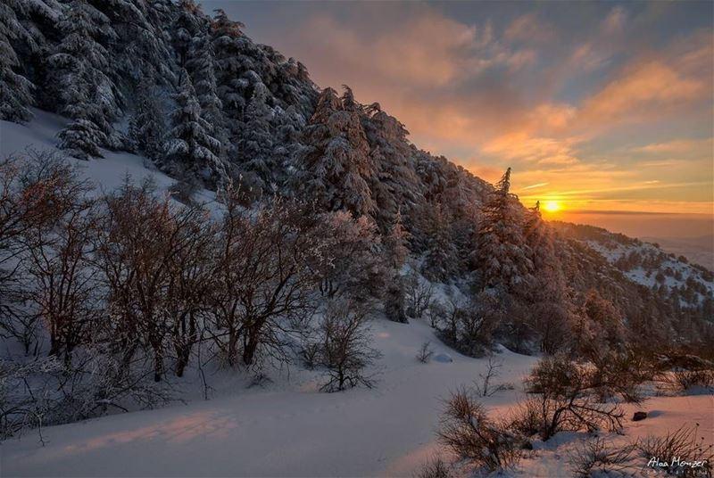 sunset from shouf reserve lebanon canon canonme sun hiking trees ... (Ain Zhalta - Bmohray Cedars)