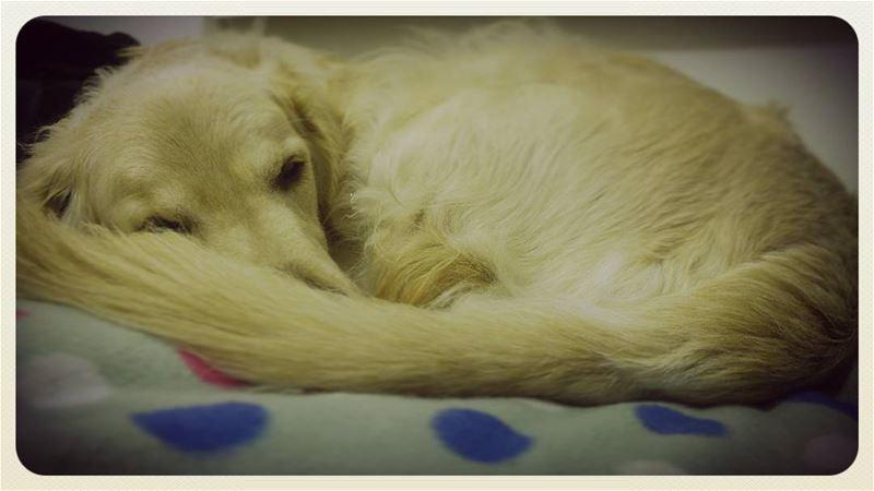 💙 💤 Woody hehasmyheart ilovemydog bed nap warm purelove ...