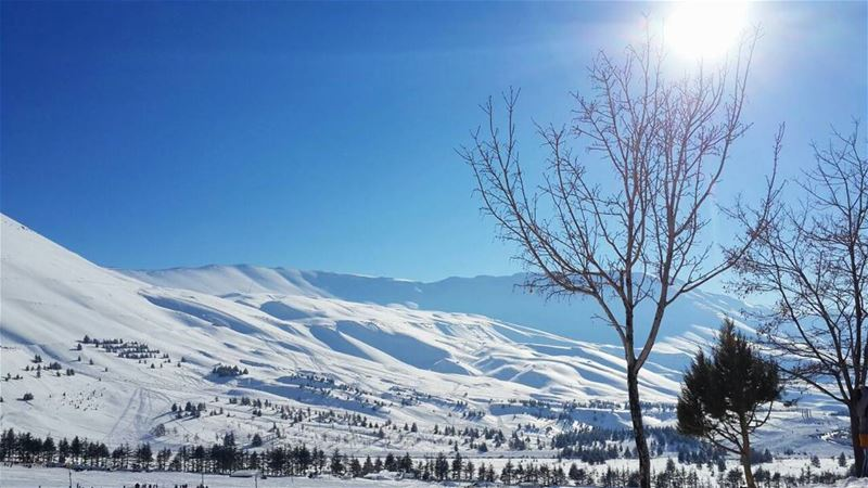 × snow, sun and clear blue skies make me wish winter would never leave × (Al Arz)